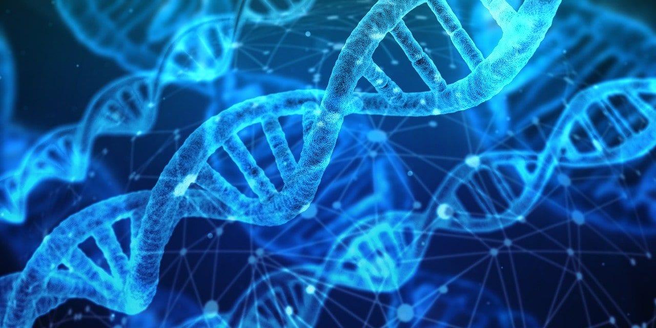 Cromosoma X: la prima sequenza completa