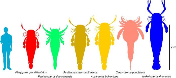 scorpione marino