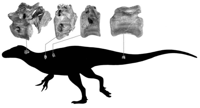 vertebre dinosauro