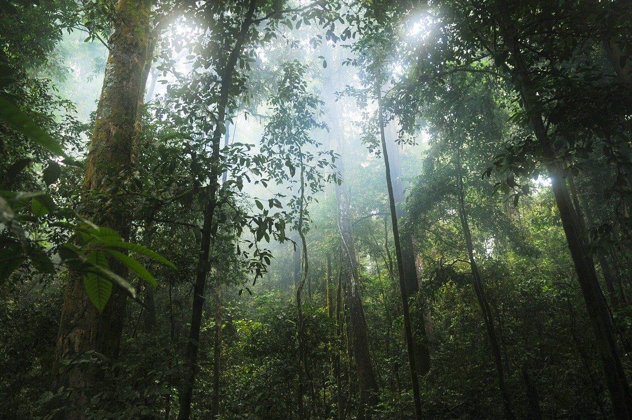 Siccità: una nuova generazione di alberi potrebbe salvare le foreste