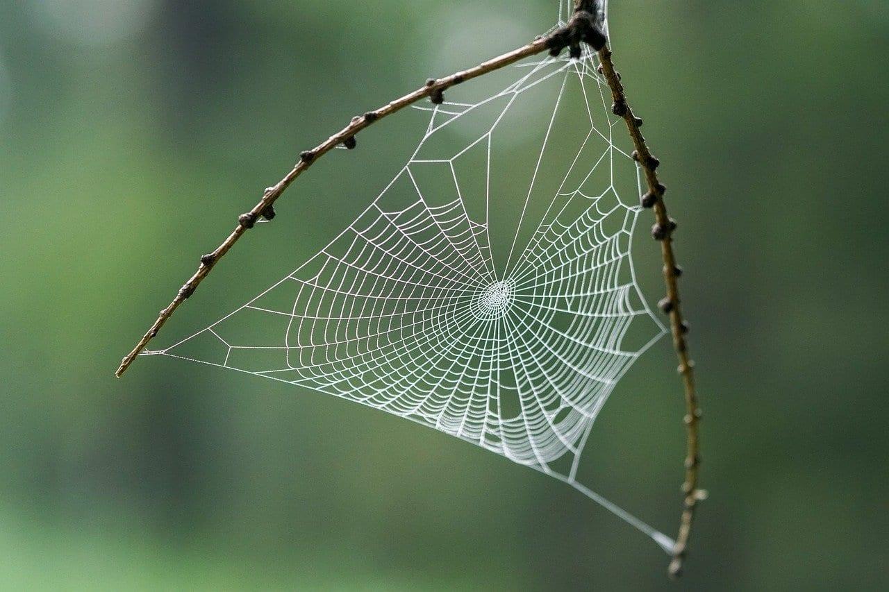 Ragnatele: i ragni le coprono di tossine per stordire e uccidere la preda