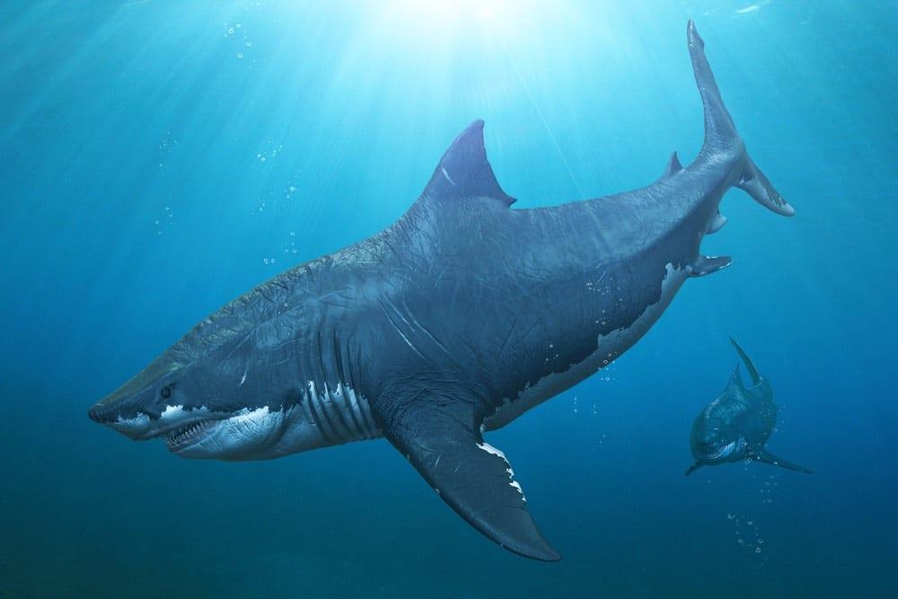 Megalodonte, scoperte le vere dimensioni dello squalo preistorico