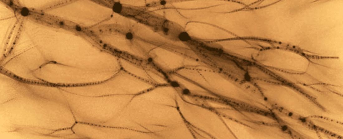 Materia oscura: una simulazione che dà una forma a qualcosa di invisibile