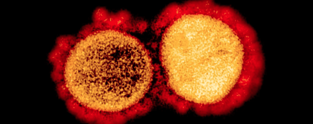 Coronavirus: esiste una forma mutata più contagiosa?