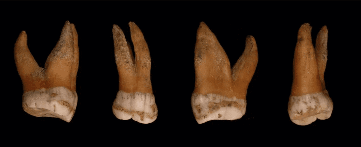 Neanderthal: sequenziato il cromosoma Y