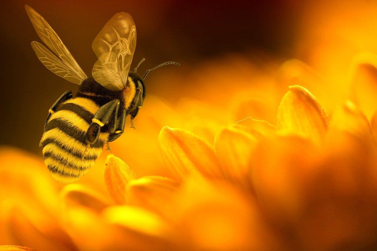 Veleno delle api: può fermare la crescita delle cellule cancerose