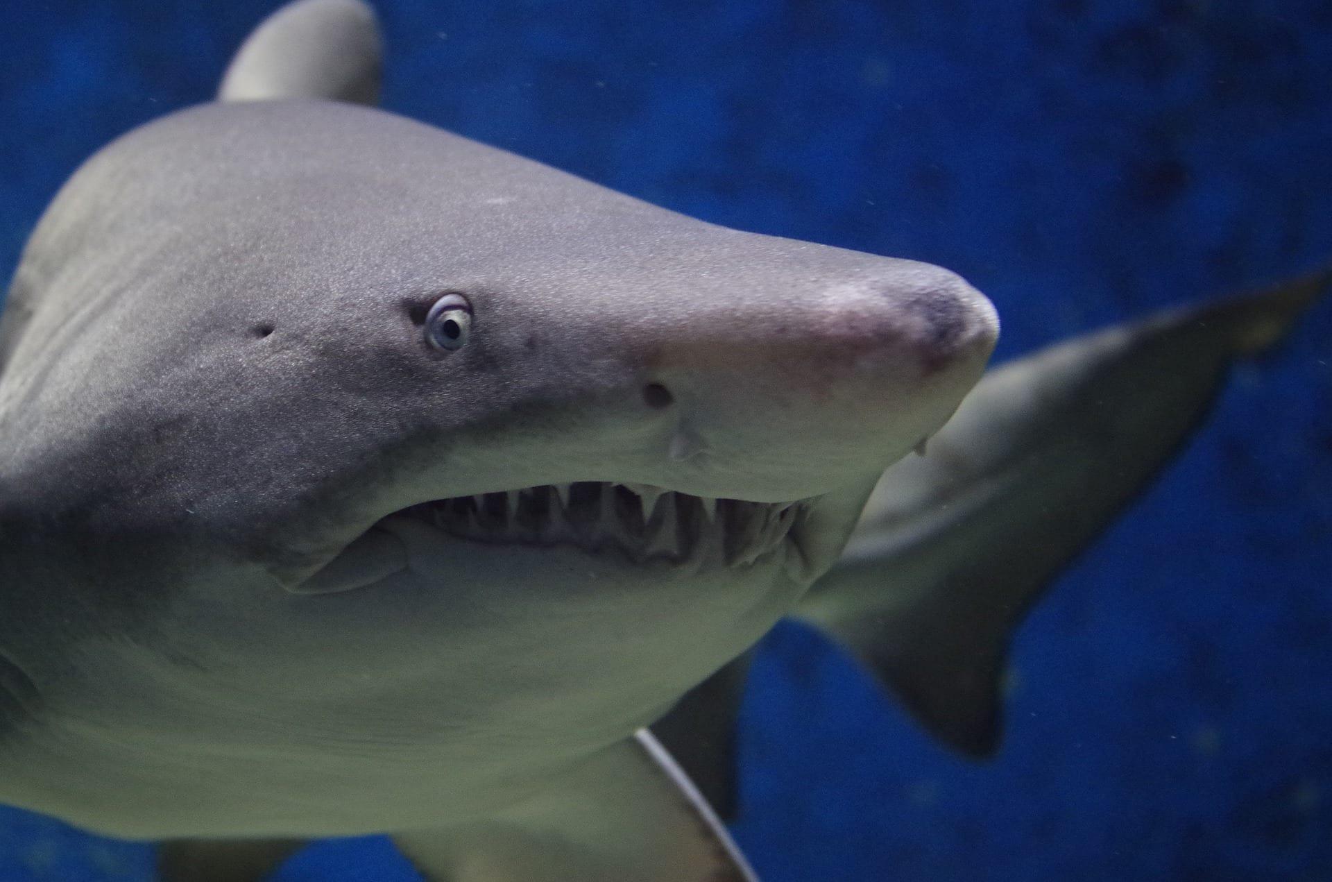 Un fossile di pesce getta una luce nuova sull'evoluzione degli squali (e non solo)