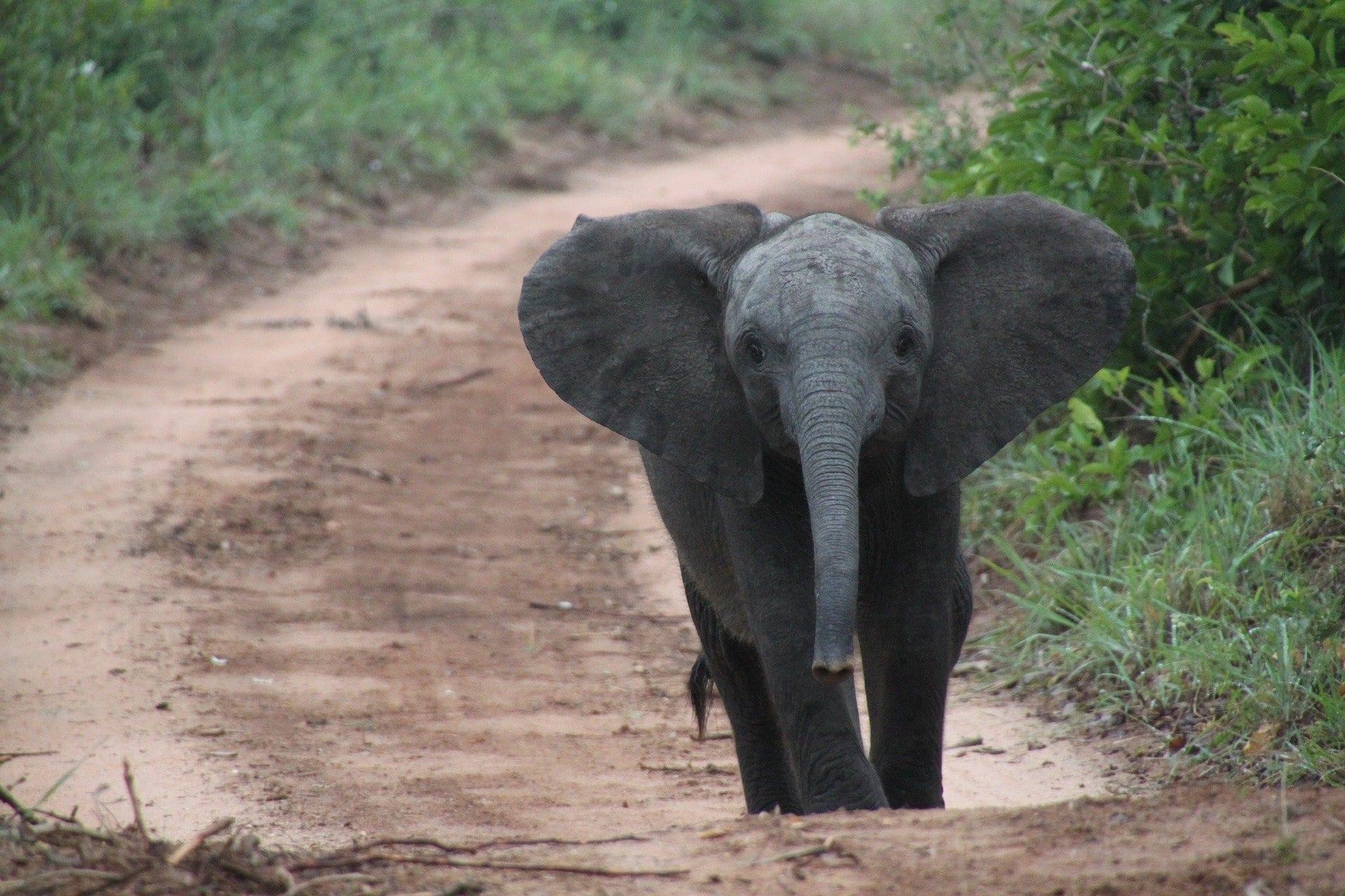 Uno studio rivela come le guerre civili influenzino gli animali selvatici