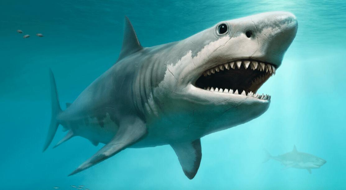 Megalodonte: ecco le dimensioni dello squalo di un tempo