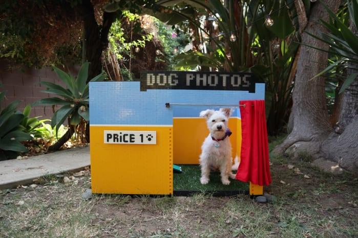 LEGO selfie per i cani