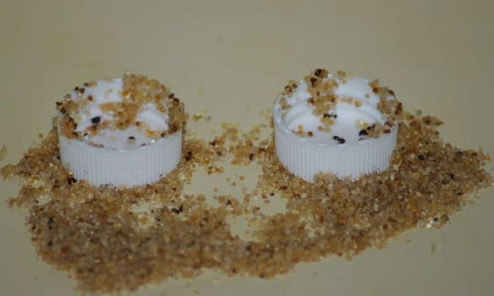 esperimento formiche