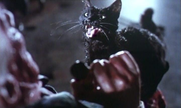 i-delitti-del-gatto-nero film di halloween su Amazon