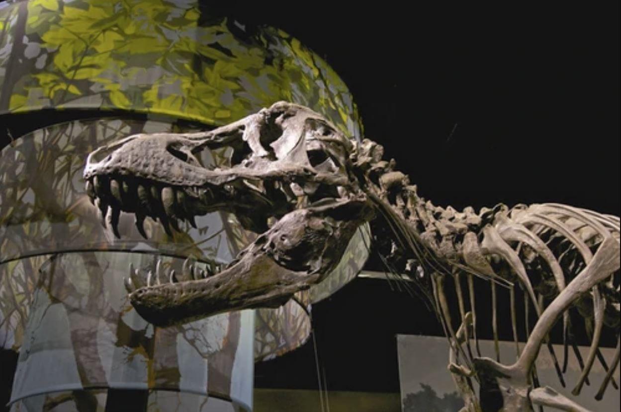 Uno scheletro di T-Rex è stato venduto a 31.8 milioni di dollari