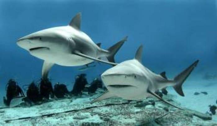700-squali