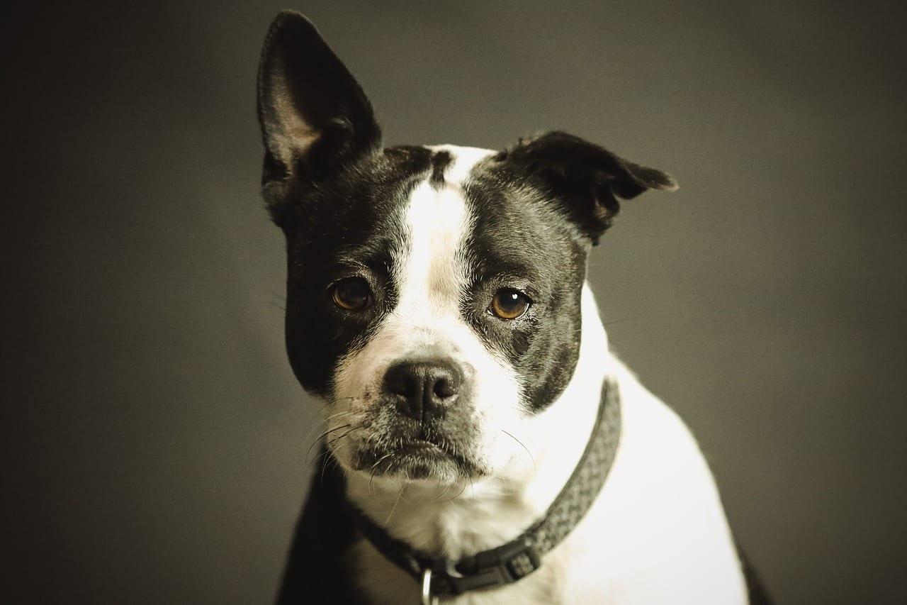 Cani: forse non capiscono proprio tutto quello che diciamo