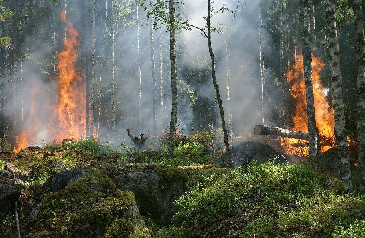 Incendi: il fumo può trasportare microbi che causano malattie infettive