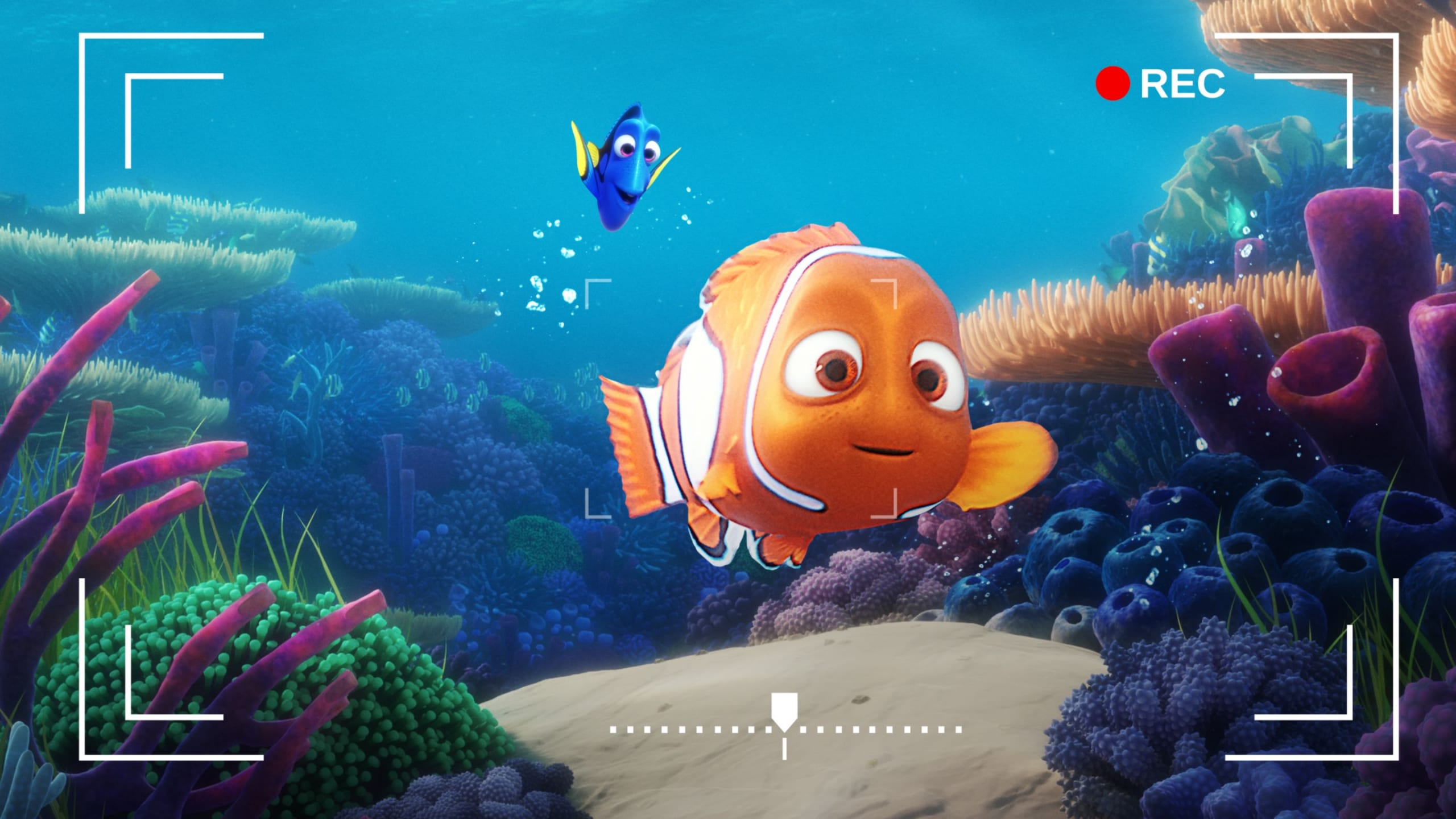 Dory's Reef Cam: disponibile su Disney+ la tua vista sulla barriera corallina