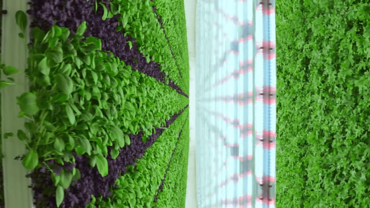 Fattoria verticale: la rivoluzione della produzione alimentare