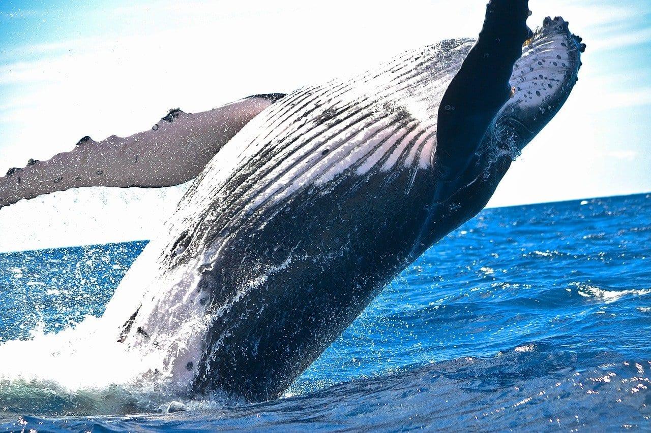 Senza il turismo, il pianeta Terra si ripopola di animali selvatici