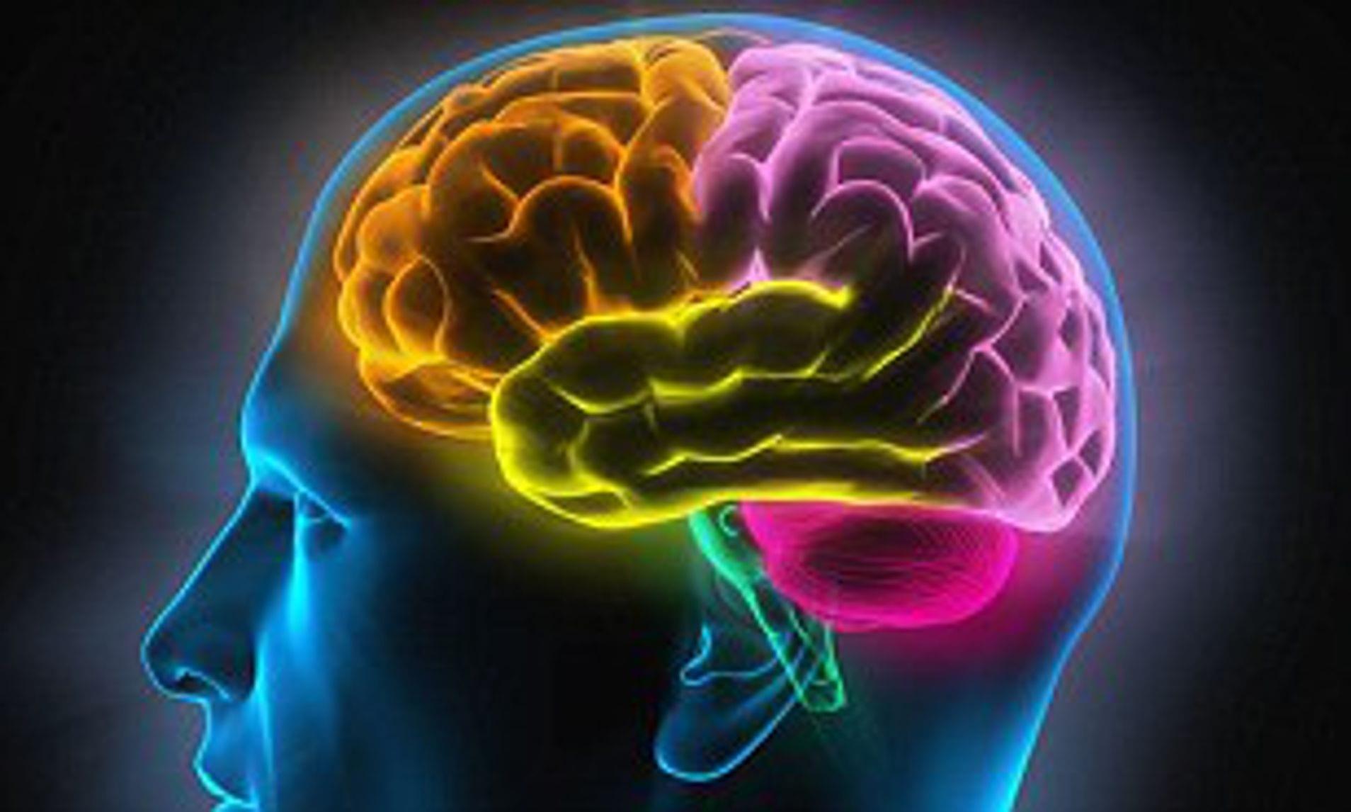 Linguaggio e memoria: umani e primati potrebbero aver condiviso lo stesso processo evolutivo