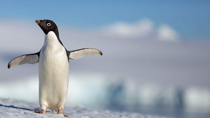 Penguins, film invernali Disney+