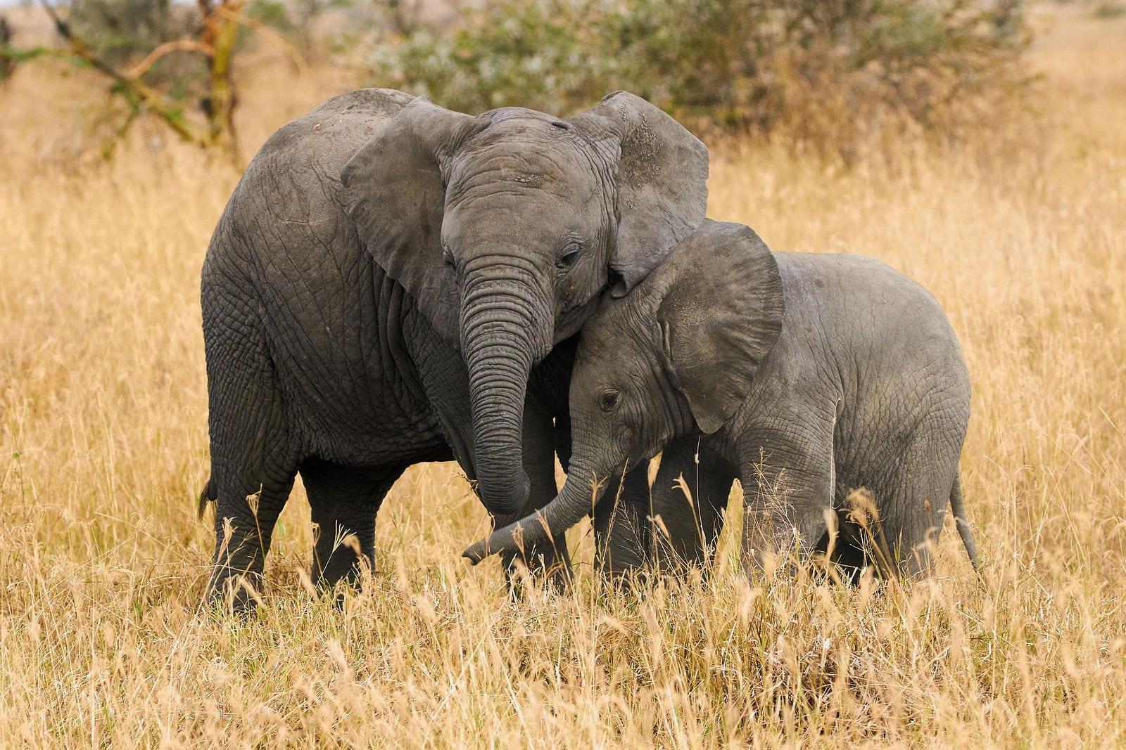 intelligenza artificiale elefanti