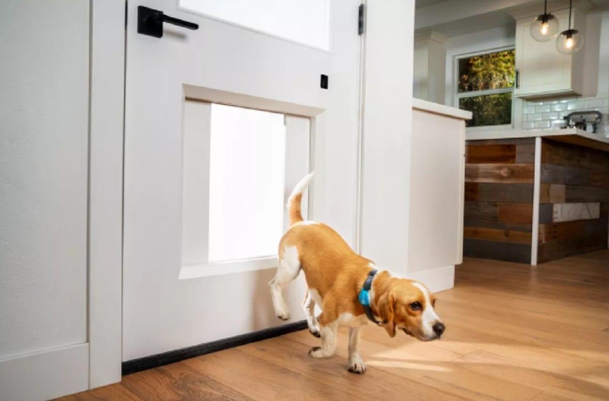 MyQ Pet Portal, il portoncino smart per cani e gatti al CES 2021