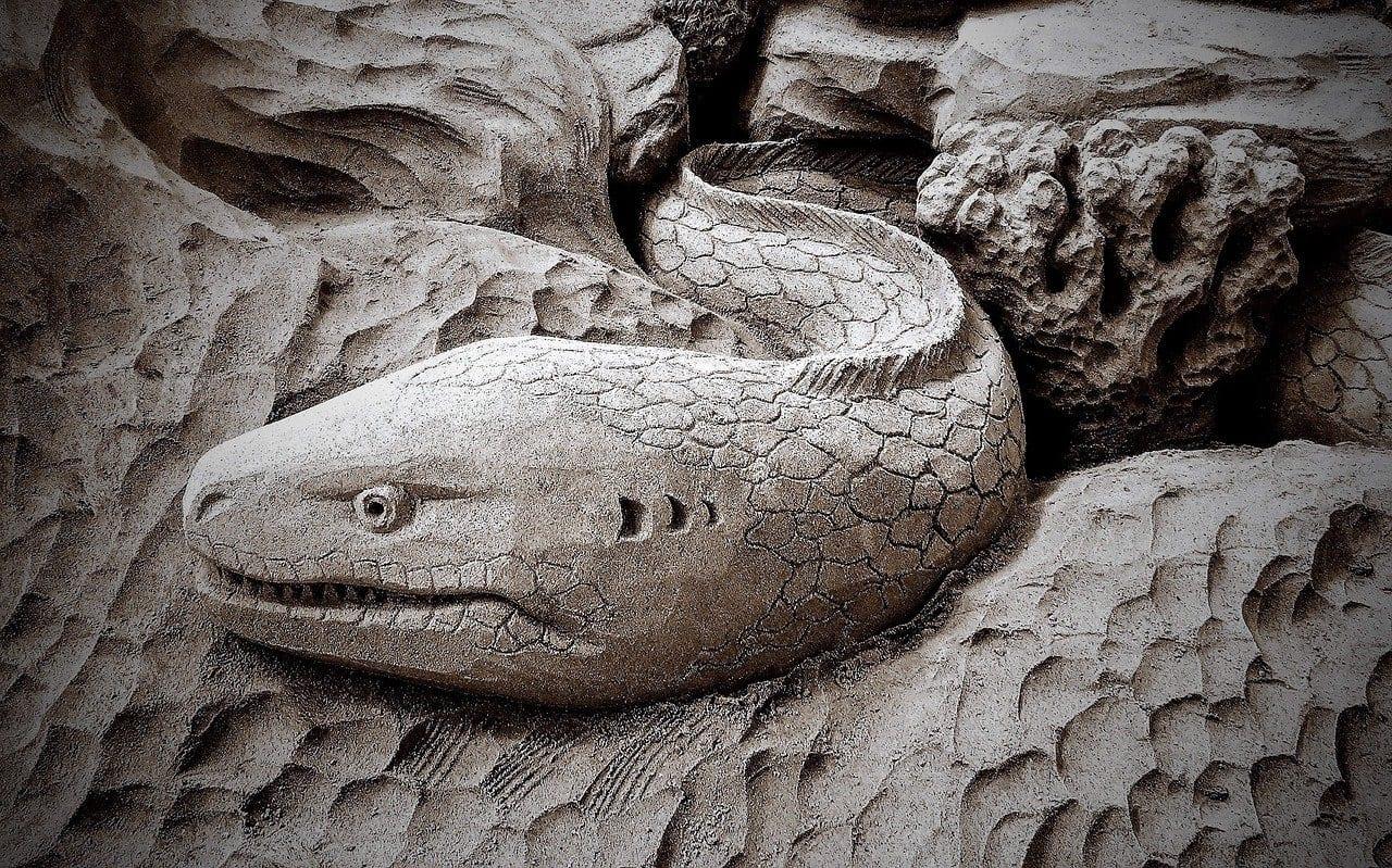 Anguille elettriche