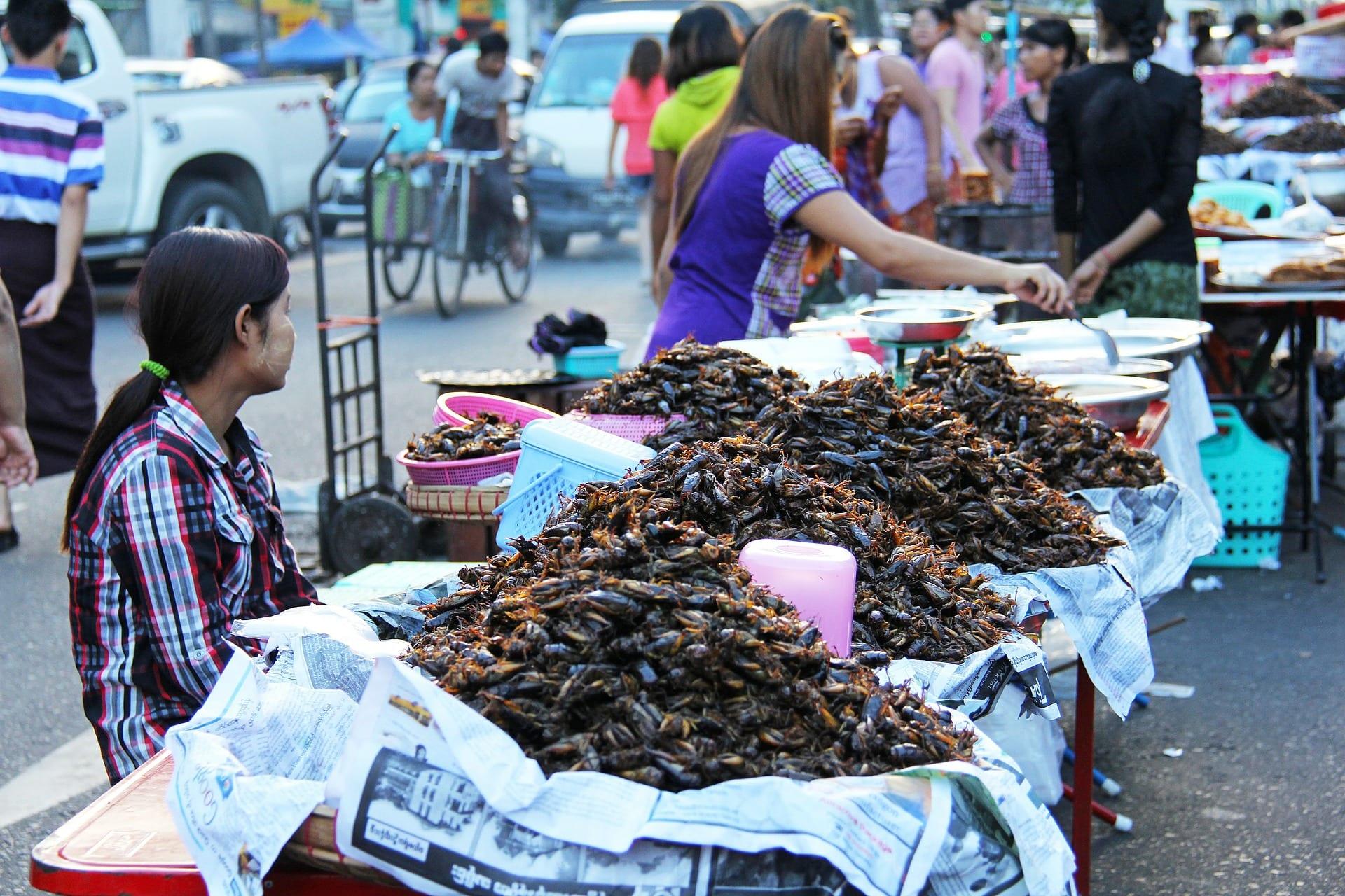 scarafaggi fritti birmania