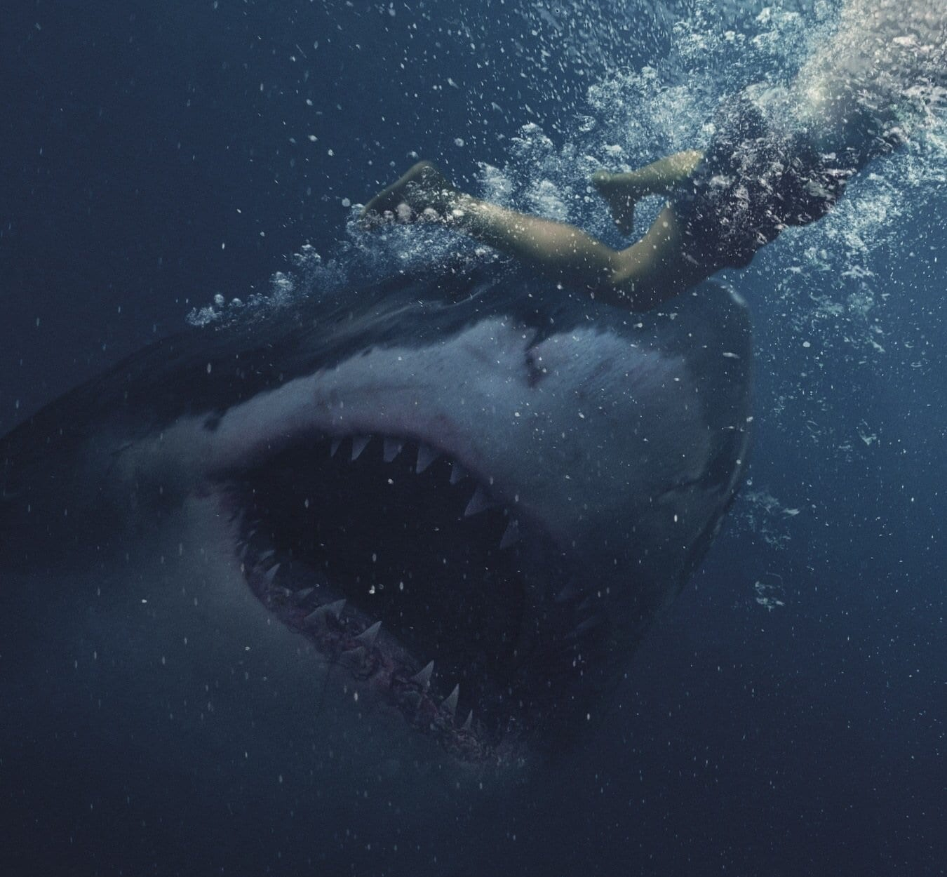 Great White: l'adrenalinico trailer del film australiano sugli squali