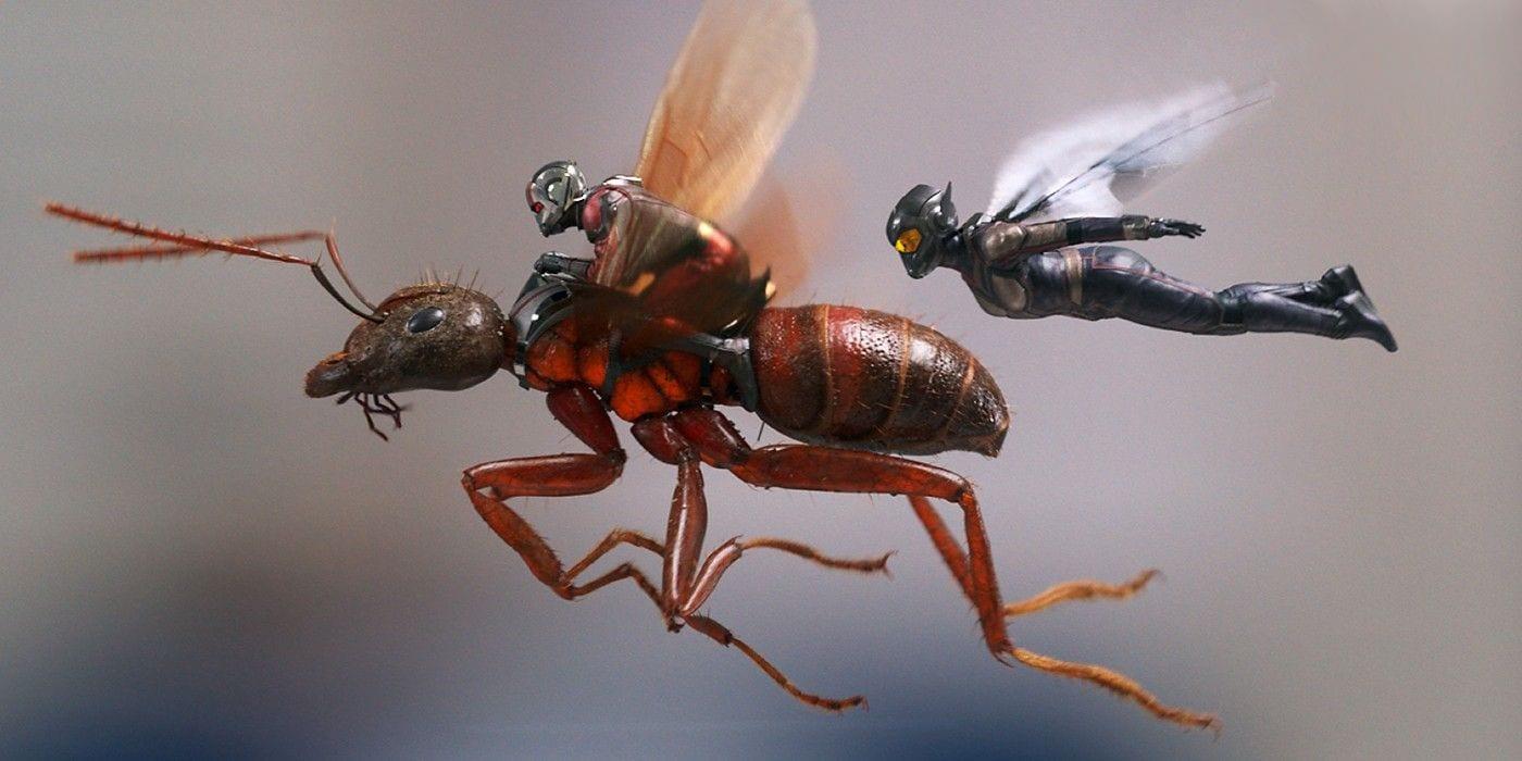 Ant Man 3