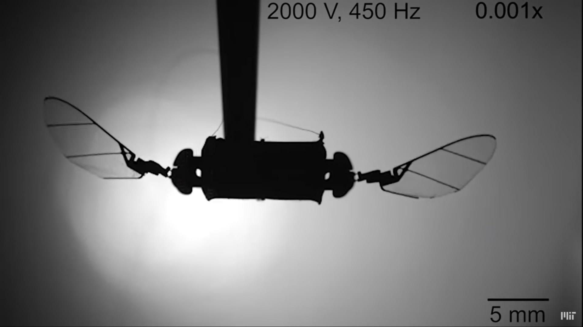 Una nuova generazione di droni insetti si sta avvicinando