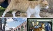 Magic The Gathering: il gatto di Lucca che ha ispirato una carta di Karl Kopinski
