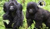 WallStreetBets, gli utenti hanno donato più di 350.000$ per salvare dei gorilla