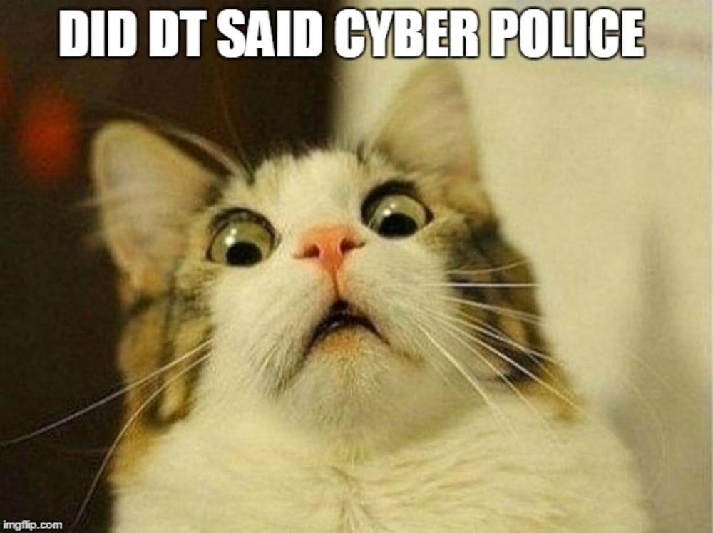 meme gatto