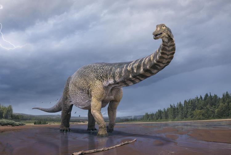 dinosauro australiano
