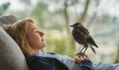 Penguin Bloom: due clip dal film drammatico con Naomi Watts ed Andrew Lincoln