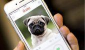 Un rifugio per animali tedesco ha scelto Tinder per dare in adozione cani e gatti, sta funzionando