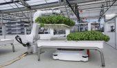 Bill Gates punta sulle coltivazioni idroponiche completamente automatizzate
