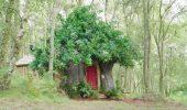Winnie the Pooh: la casa dell'orsetto esiste e si può prenotare su Airbnb