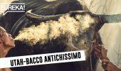 Si masticava tabacco già nel Pleistocene (12.000 anni fa)