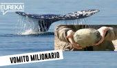 Vomito di balena da 1 milione di euro
