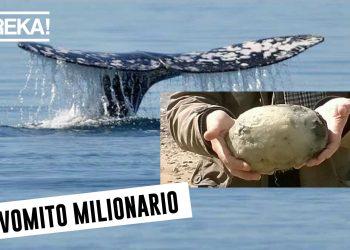 vomito balena