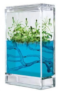 Il formicaio artificiale leganerd - Formiche in bagno ...